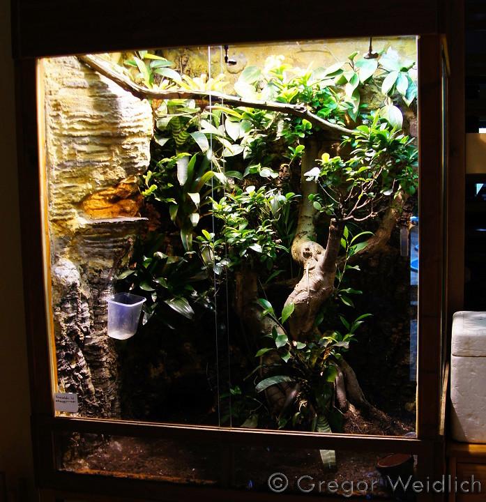 Débute en terrariophilie, terra arboricole, Anolis carolinensis - Page 2 Dsc03010