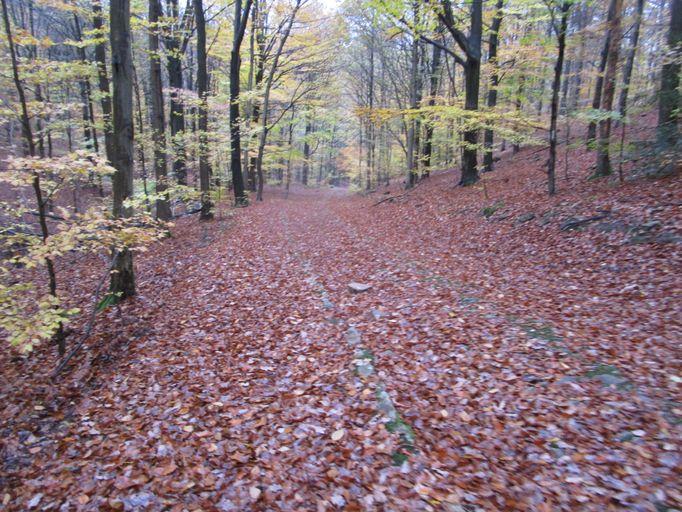 Voie romaine dans les bois de Staneux Img_0520