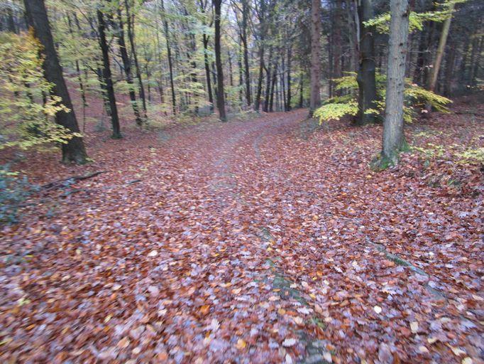 Voie romaine dans les bois de Staneux Img_0521
