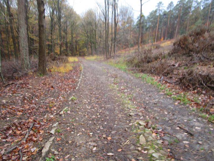 Voie romaine dans les bois de Staneux Img_0522