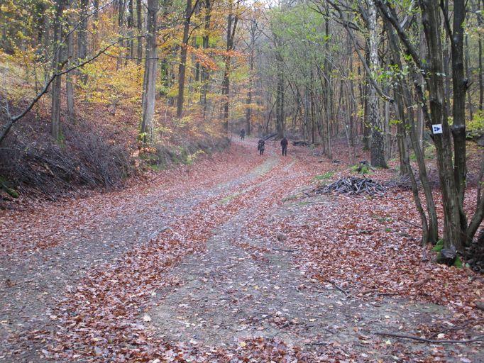 Voie romaine dans les bois de Staneux Img_0613