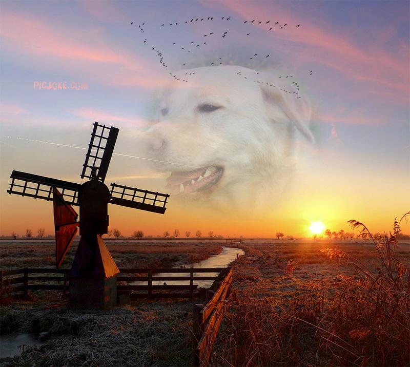Le labrador (avec video et photos de Djuna) 2-fr-310