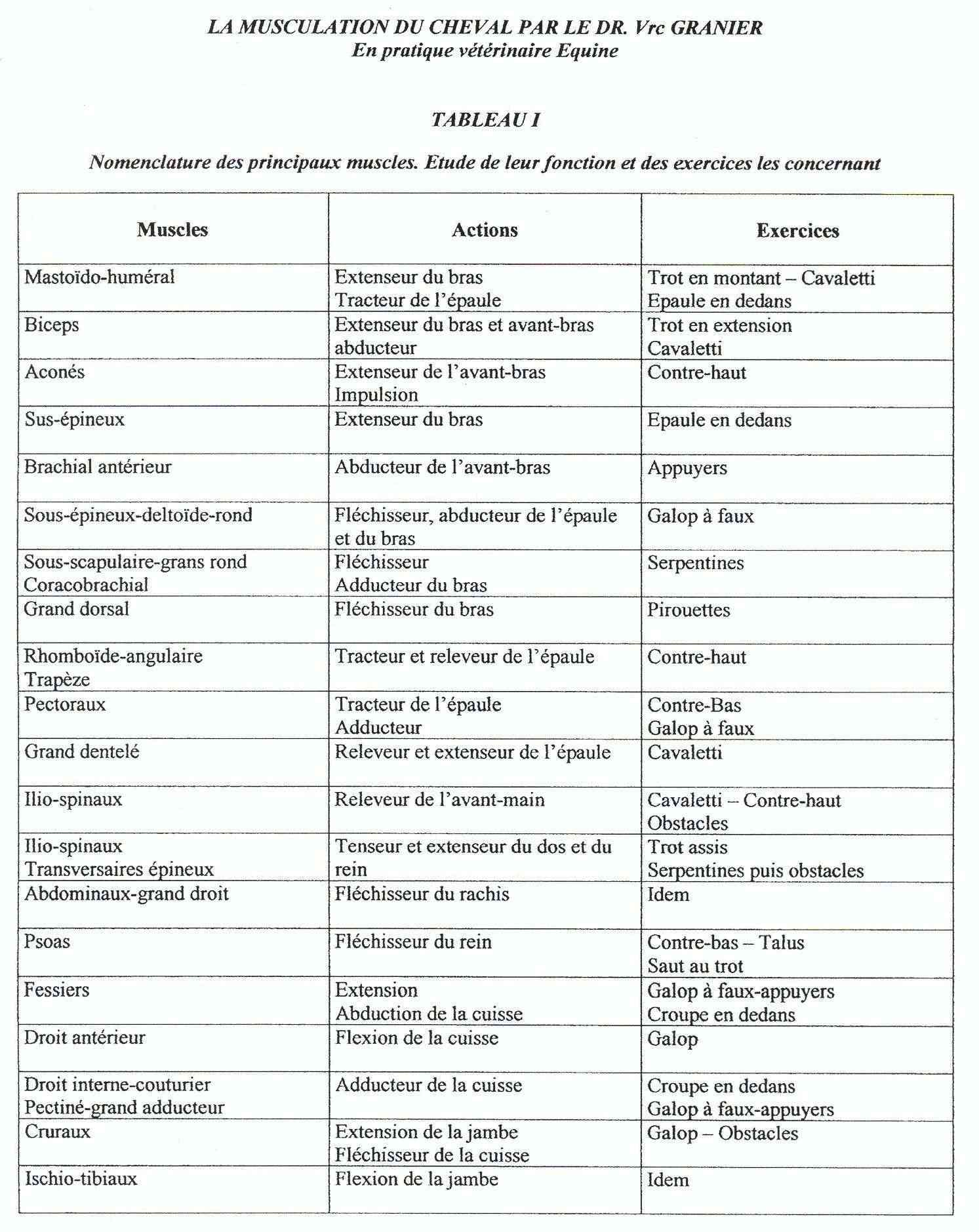 Fiches correspondance exercices - musculature 32_tab10