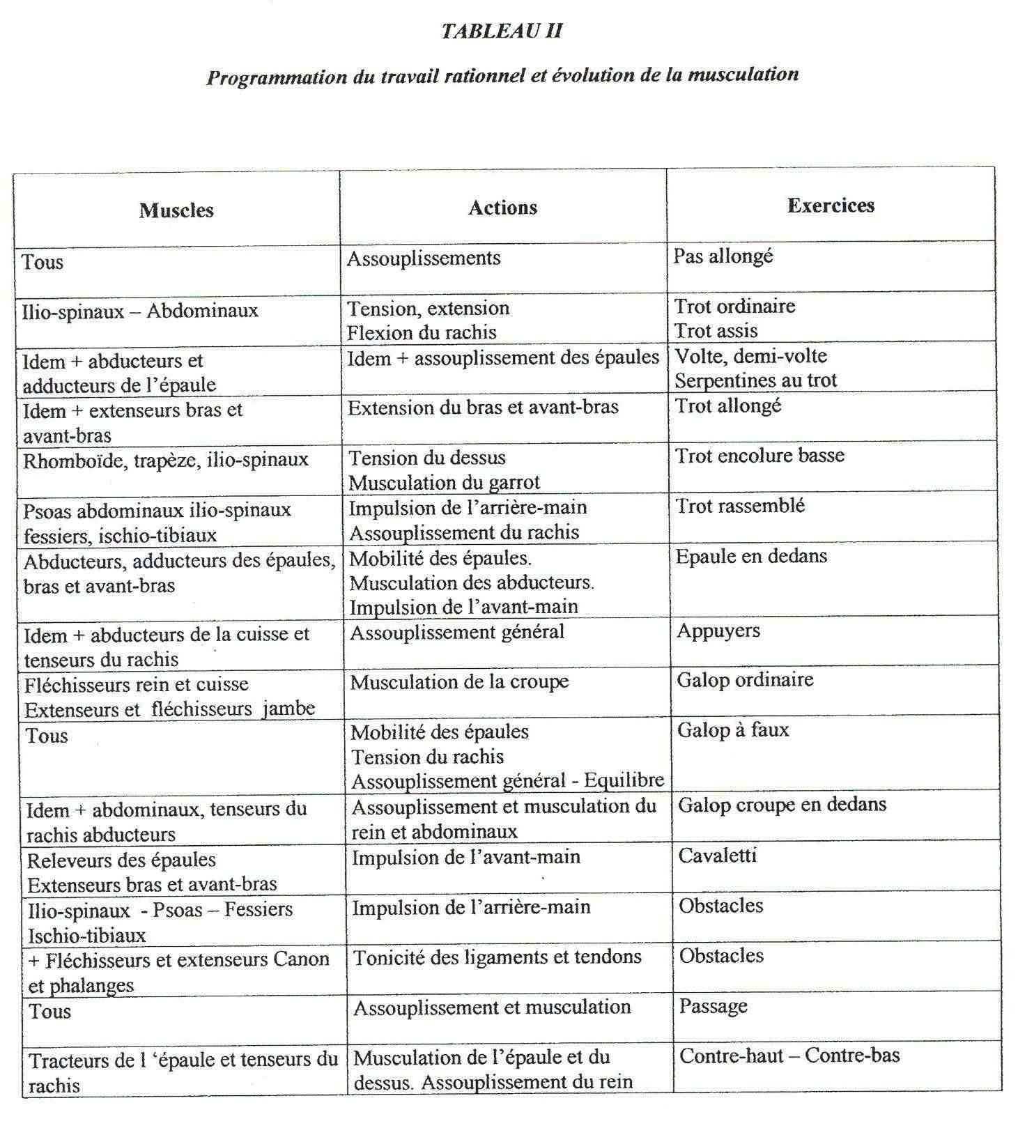 Fiches correspondance exercices - musculature 33_tab10