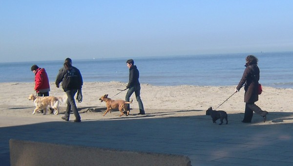 VIP et MAX à la plage (2 mars 2010) Naty-212