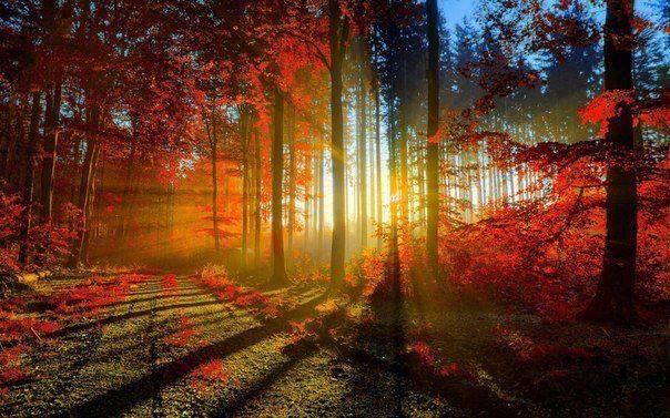 Photos d'automne - Page 5 14449910