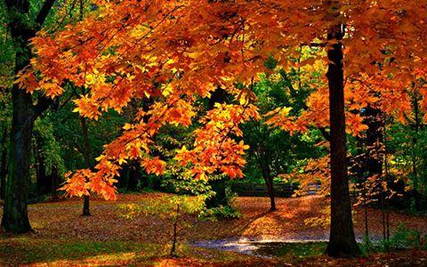 Photos d'automne - Page 6 14463010