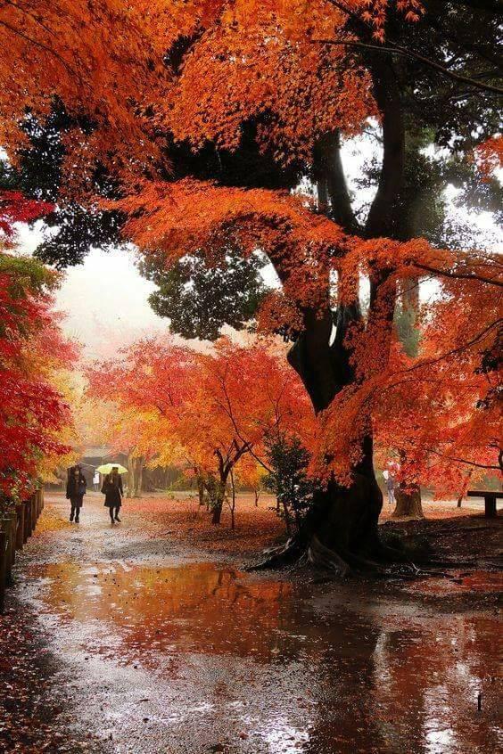Photos d'automne - Page 7 21687710