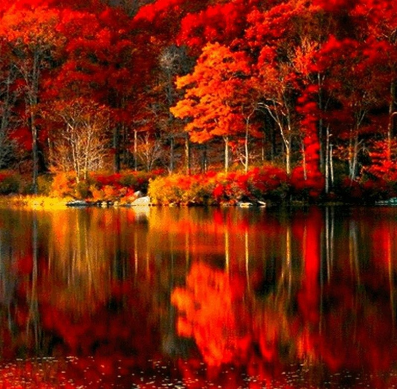 Photos d'automne - Page 7 21761410