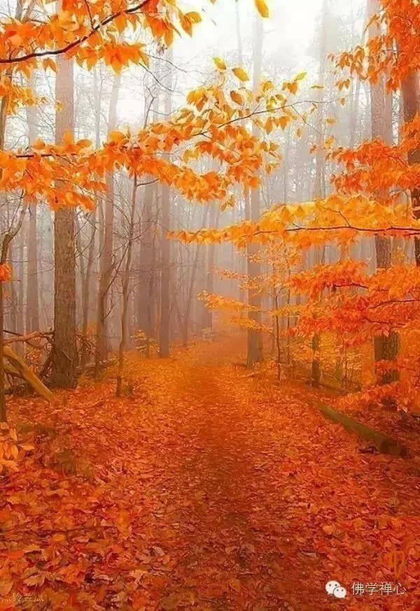 Photos d'automne - Page 6 21761710