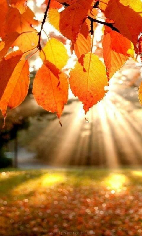 Photos d'automne - Page 2 22366810