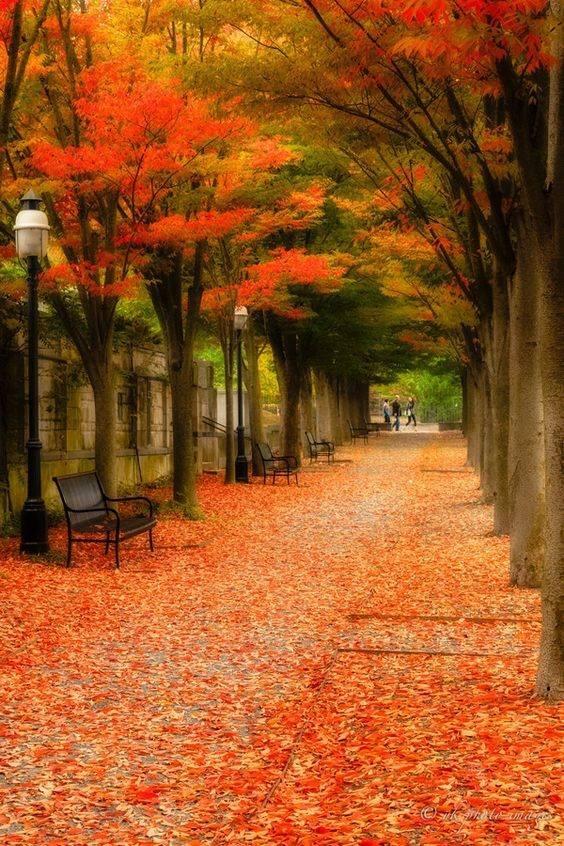 Photos d'automne - Page 3 22519410