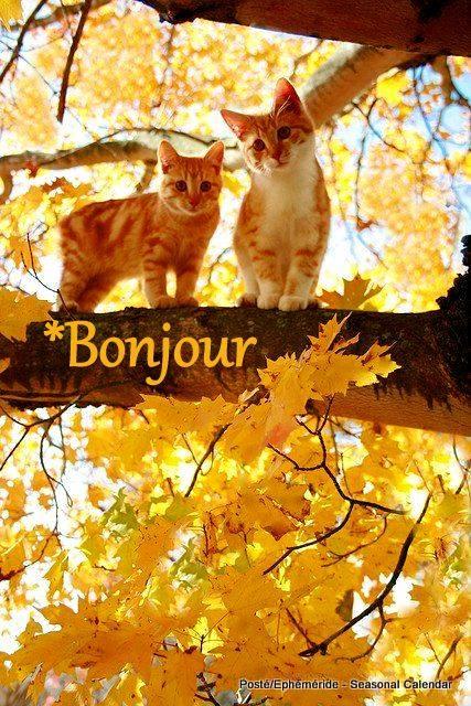 Photos d'automne - Page 3 22519510