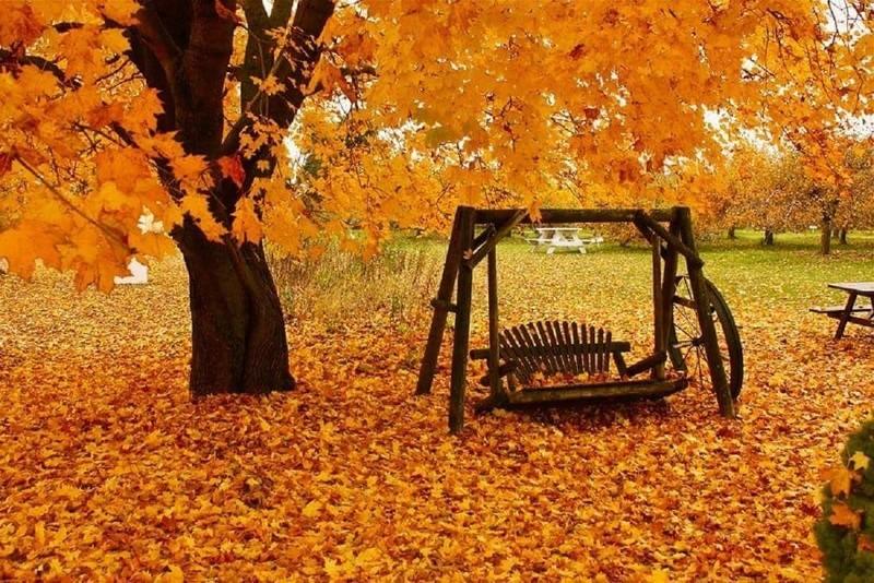 Photos d'automne - Page 3 22519910