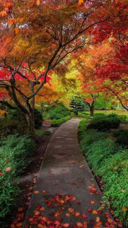 Photos d'automne - Page 6 22814010