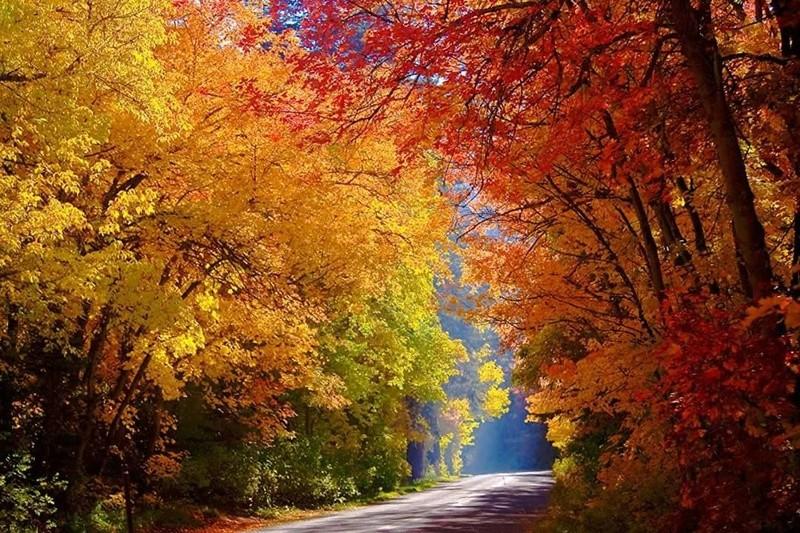 Photos d'automne - Page 5 23116710