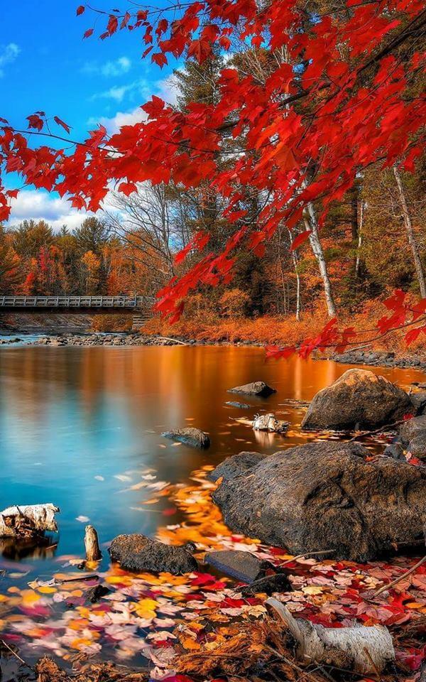 Photos d'automne - Page 5 23172810