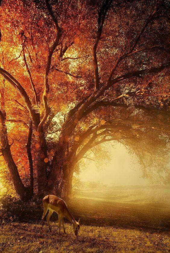 Photos d'automne - Page 6 23380110