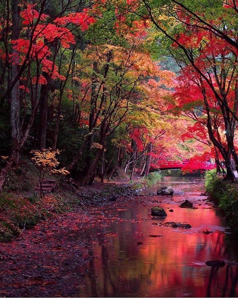 Photos d'automne - Page 6 23473010