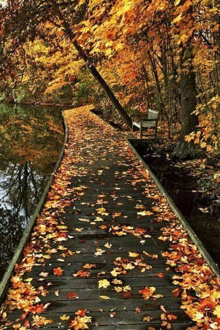 Photos d'automne - Page 7 23722610