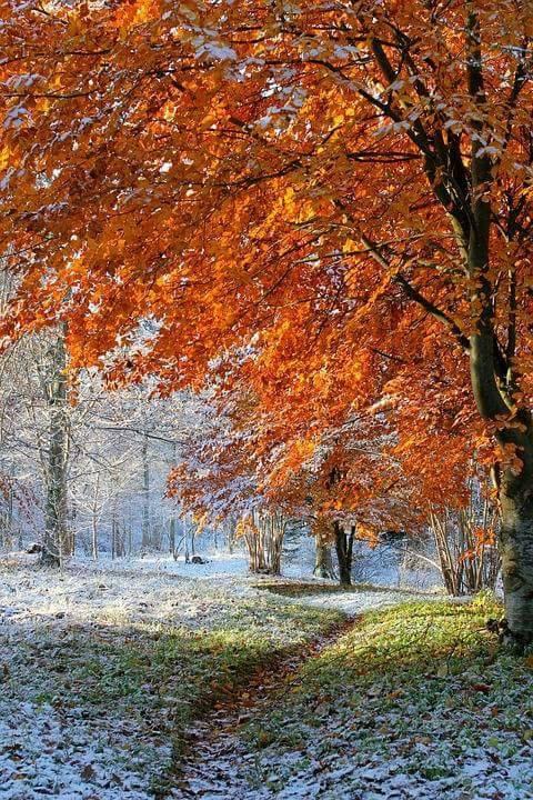 Photos d'automne - Page 7 23722711