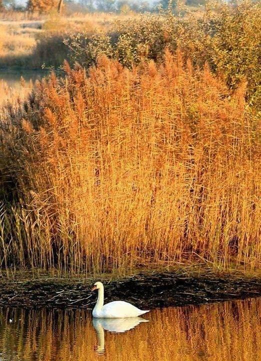 Photos d'automne - Page 7 23844610