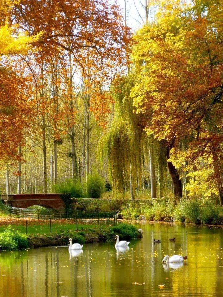 Photos d'automne - Page 7 24296210
