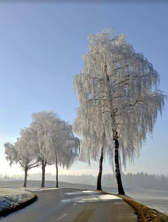 Photos d'hiver  - Page 9 25152011