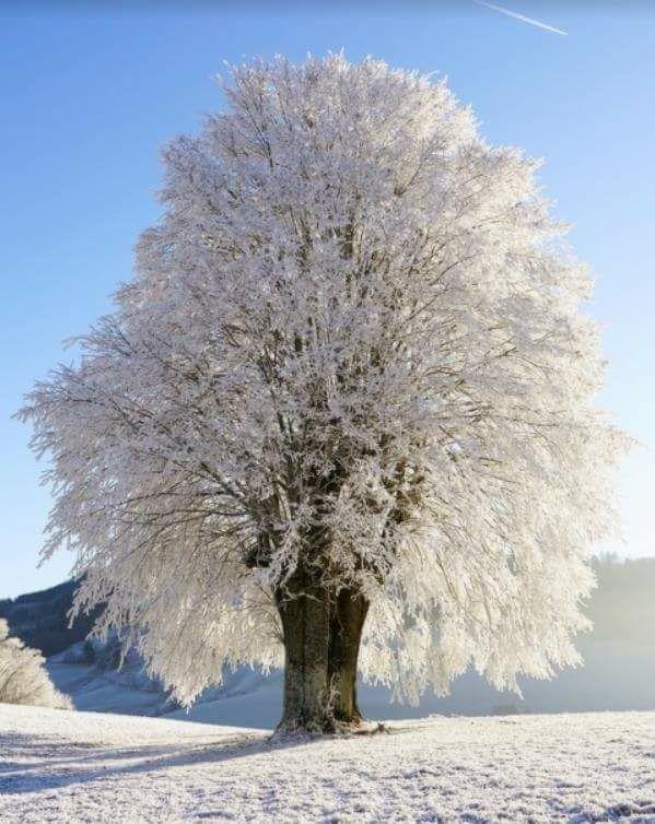 Photos d'hiver  - Page 2 25398810
