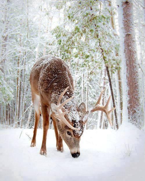 Photos d'hiver  - Page 2 25498410