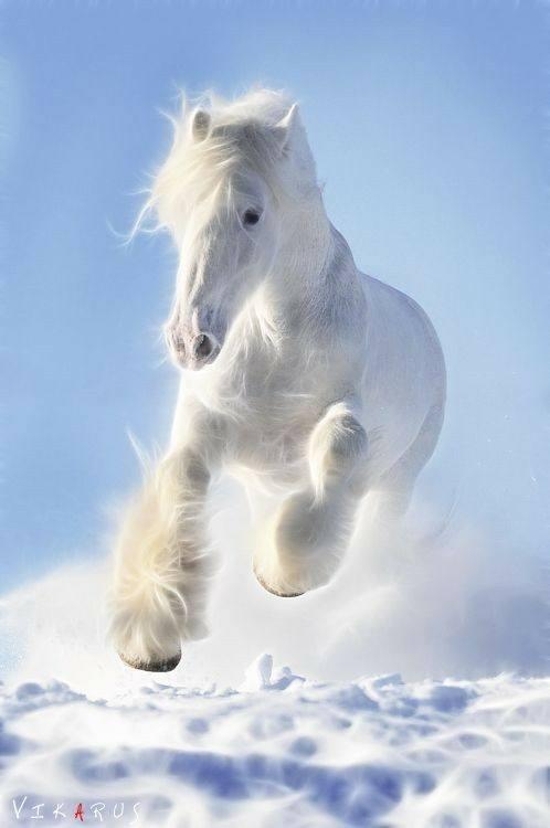 Photos d'hiver  - Page 3 25551810