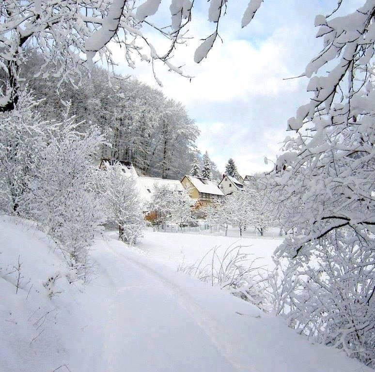Photos d'hiver  - Page 3 26114010