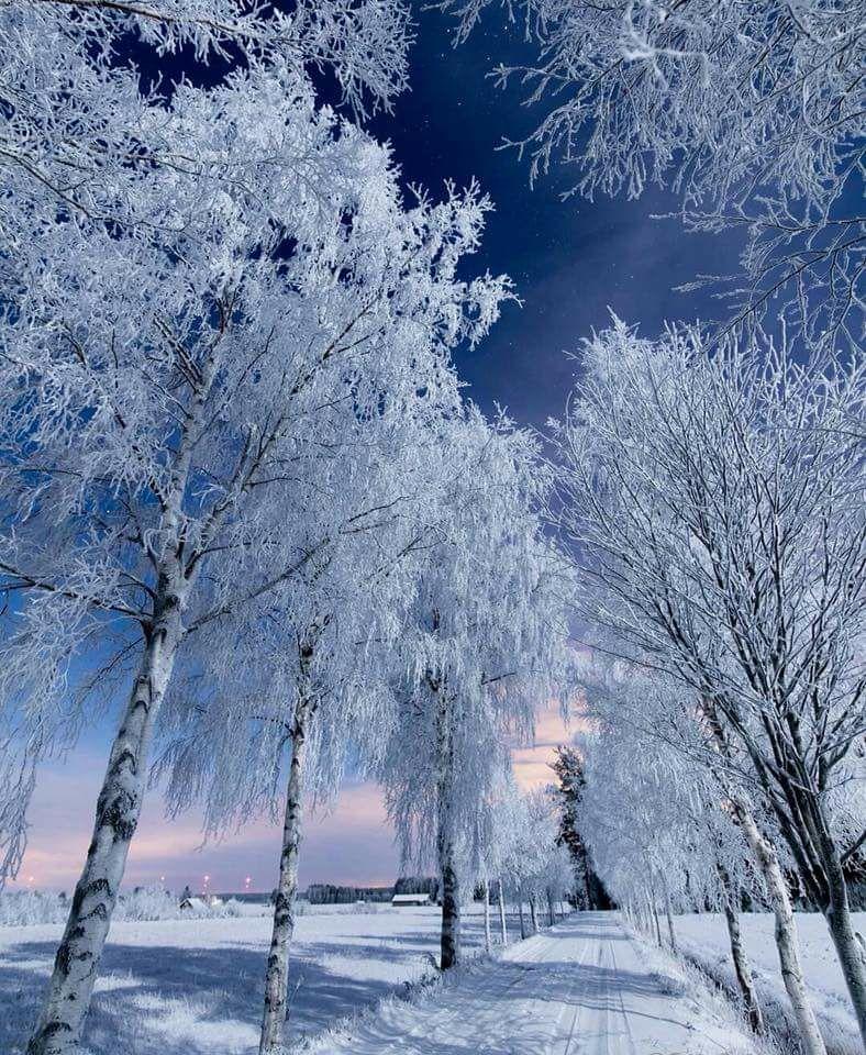 Photos d'hiver  - Page 4 26219910