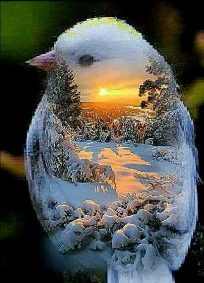 Photos d'hiver  - Page 4 26239410