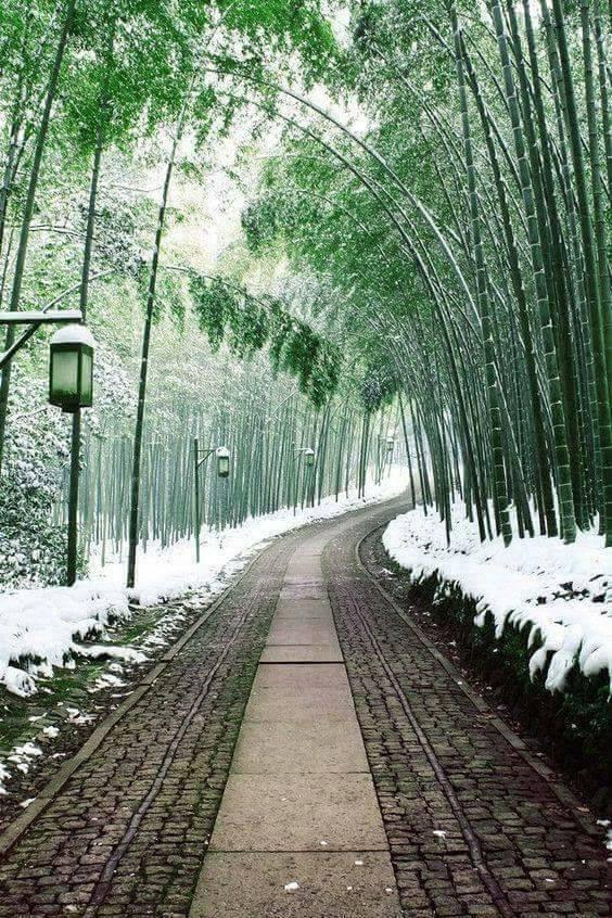 Photos d'hiver  - Page 9 28377510
