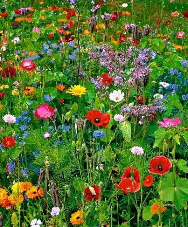 Photos de printemps/été - Page 4 29792611