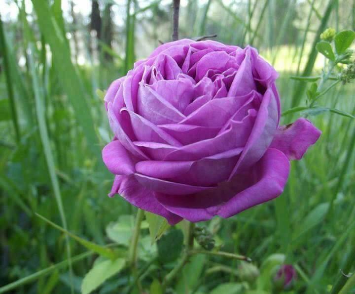 Photos de printemps/été - Page 3 30127810