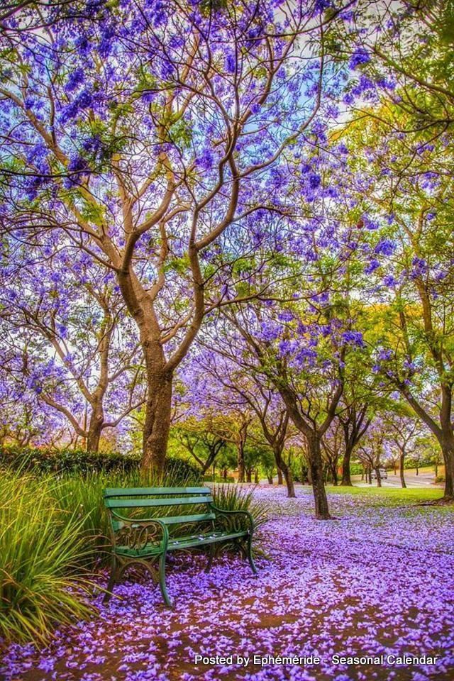 Photos de printemps/été - Page 4 30572310