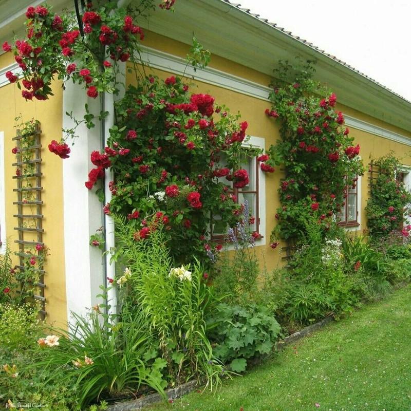 Photos de printemps/été - Page 4 30689010