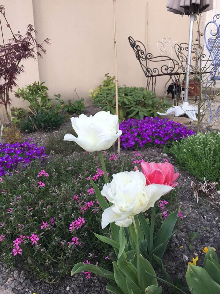 Photos de printemps/été - Page 5 31103510