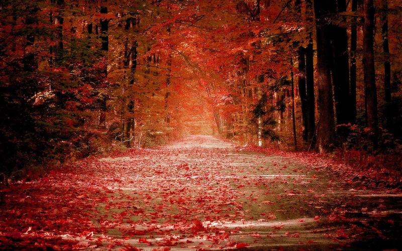 Images d'automne  - Page 7 42282110
