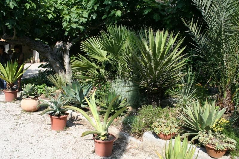 Fabuleux jardin de succulentes près de Toulon A_l_en10