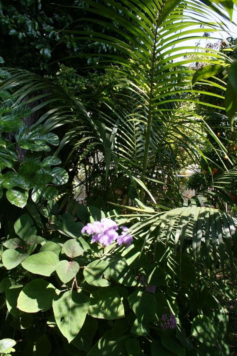 Ca commence, quelques fleurs à voir Ambian18
