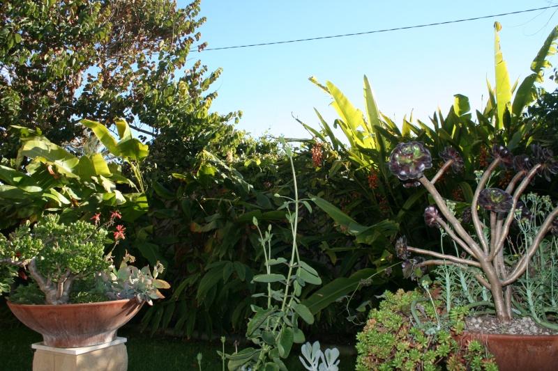 Ambiance de 20 déc dans mon jardin Ambian26
