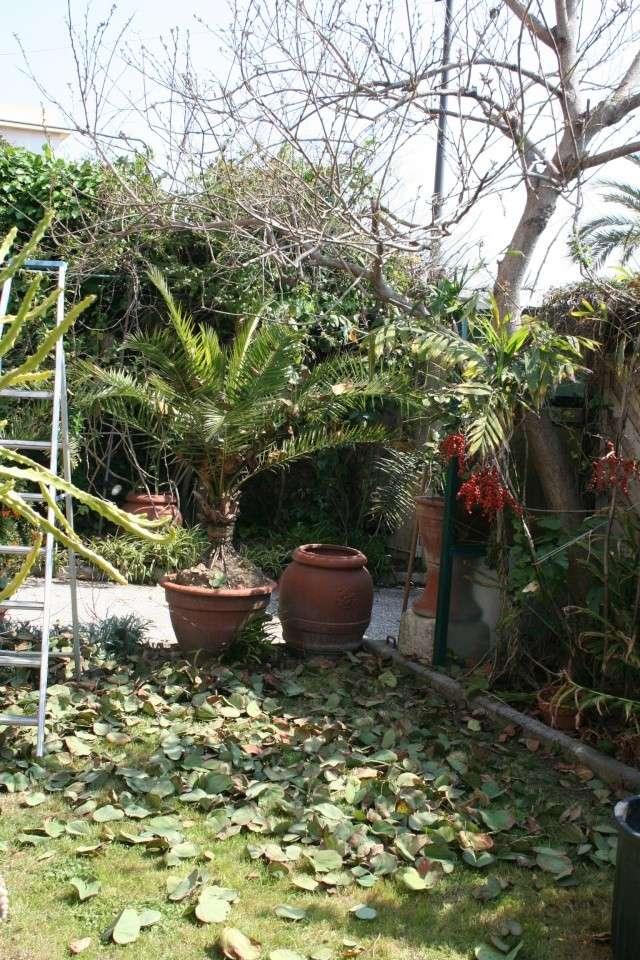 Splendeurs de mon jardin de la mi avril Bauhin10
