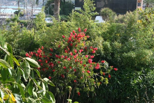 Quelques fleurs Callis10