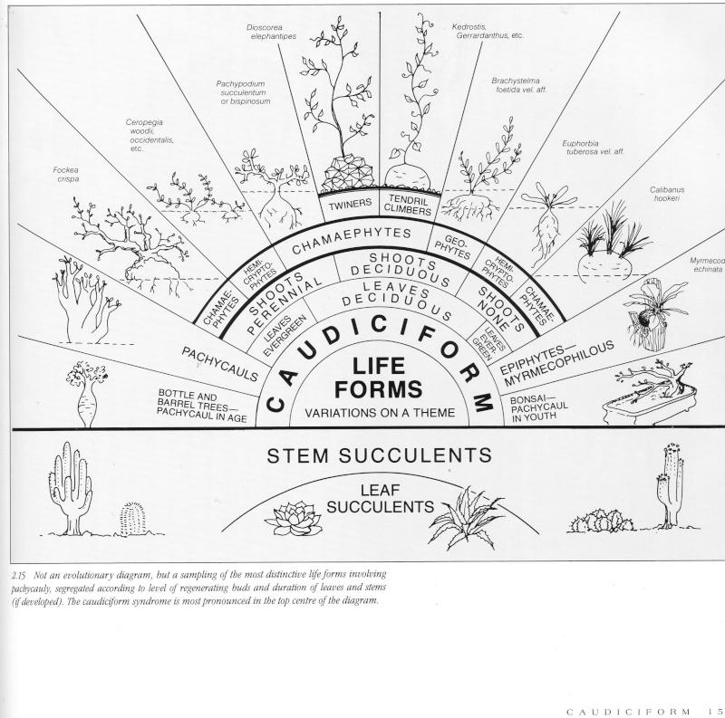 Catégorisation des Caudiciformes, selon Gordon Rowley Caudic10