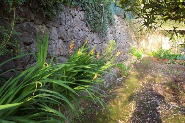 Quiz jaune - Chasmanthe floribunda Chez_m10