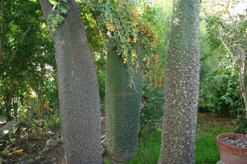 Un jardin extraordinaire près de Cannes Choris10