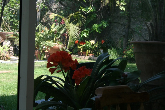 Splendeurs de mon jardin de la mi avril Depuis10